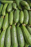 Groen en verse komkommers Stock Foto