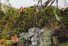 Groen en wit mos in de beken van natuurreservaatolenyi in het gebied van Sverdlovsk royalty-vrije stock afbeelding