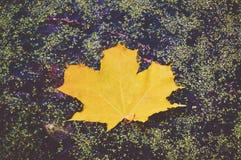 Groen esdoornblad in de herfst op een achtergrond van water met plonsen Royalty-vrije Stock Foto
