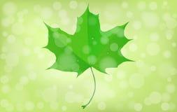Groen esdoornblad op onscherpe achtergrond De zomer, sprinthema Vector illustratie eps10 Stock Afbeeldingen