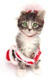 Groen eyed tabby katje met de uitrusting van Kerstmis Royalty-vrije Stock Foto