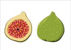 Groen fig Vector Illustratie