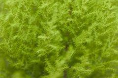 Groen floiageonduidelijk beeld Stock Foto