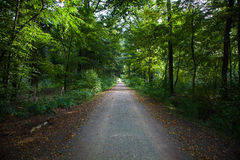 Groen Forest Footpath Royalty-vrije Stock Afbeelding