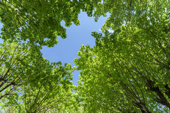Groen Forest Trees Against Sky royalty-vrije stock fotografie