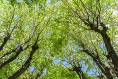Groen Forest Trees Against Sky Royalty-vrije Stock Fotografie