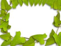 Groen frame Stock Foto