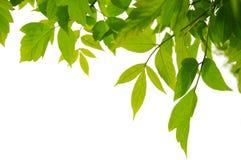 Groen frame Royalty-vrije Stock Afbeeldingen