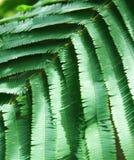 Groen gaat weinig weg royalty-vrije stock foto
