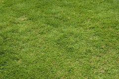 Groen gazon Royalty-vrije Stock Foto's