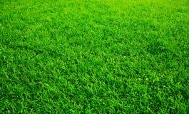 Groen gazon royalty-vrije stock afbeelding