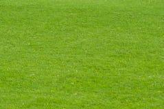Groen gazon Royalty-vrije Stock Afbeeldingen