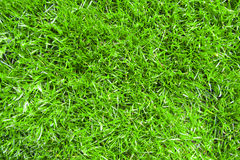 Groen gazon Stock Afbeelding