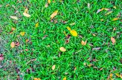 Groen gazon en gele bladeren op het gras Royalty-vrije Stock Foto's