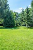 Groen gazon en overvloed van bomen Royalty-vrije Stock Foto