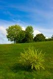 Groen gazon met struik Royalty-vrije Stock Afbeeldingen