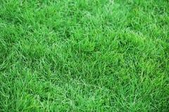Groen gazon met vers gras als achtergrond Royalty-vrije Stock Fotografie