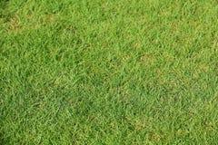 Groen gazon met vers gras als achtergrond Stock Afbeeldingen