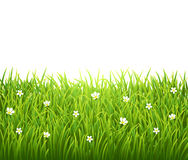 Groen geïsoleerd gras met bloemen op wit Stock Afbeeldingen