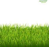 Groen geïsoleerd gras op witte achtergrond Royalty-vrije Stock Afbeeldingen