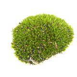 Groen geïsoleerd mos royalty-vrije stock foto