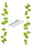Groen geïsoleerdK blad Stock Afbeelding