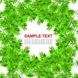 Groen geïsoleerdp bladerenframe Stock Afbeelding