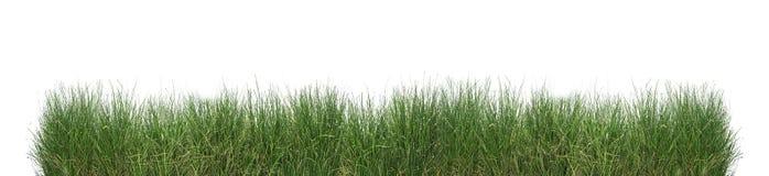 Groen geïsoleerdr gras Royalty-vrije Stock Fotografie