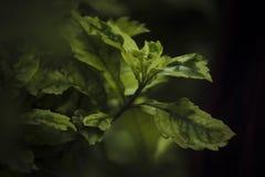 Groen geïsoleerds blad Royalty-vrije Stock Foto's