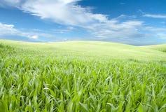 Groen gebied. Stock Foto