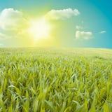 Groen gebied. Stock Fotografie