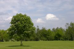 Groen gebied Royalty-vrije Stock Foto's