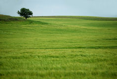 Groen gebied stock afbeelding