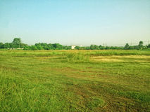 Groen gebied Stock Fotografie