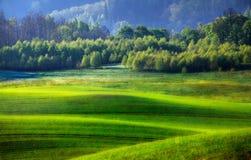 Groen gebied Royalty-vrije Stock Foto