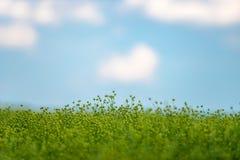 Groen gebied, blauwe hemel Stock Afbeelding
