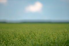 Groen gebied, blauwe hemel Royalty-vrije Stock Foto's
