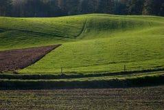 Groen gebied in de lente Royalty-vrije Stock Foto's