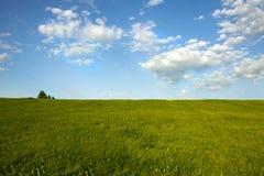 Groen Gebied en Blauwe Hemel Stock Foto