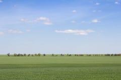 Groen gebied en blauwe hemel met lichte wolken stock afbeeldingen