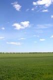 Groen gebied en blauwe hemel met lichte wolken stock fotografie