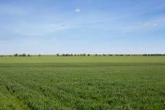 Groen gebied en blauwe hemel met lichte wolken stock foto's