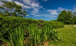Groen gebied en blauwe hemel met lichte wolken Royalty-vrije Stock Afbeeldingen