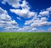 Groen gebied en cloudscape stock afbeelding