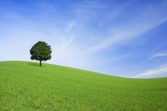 Groen gebied en eenzame boom Royalty-vrije Stock Afbeelding