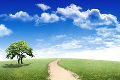 Groen gebied en eenzame boom Royalty-vrije Stock Fotografie