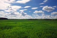 Groen gebied en mooie blauwe bewolkte hemel met lichte wolken Stock Foto's