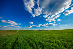 Groen gebied en mooie zonsondergang Royalty-vrije Stock Foto
