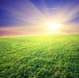 Groen gebied en mooie zonsondergang Royalty-vrije Stock Afbeelding