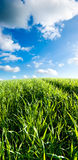 Groen gebied en witte wolken Stock Afbeelding